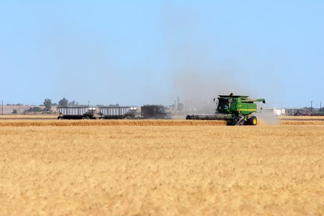 Ag-Wheat Harvest 2.jpg