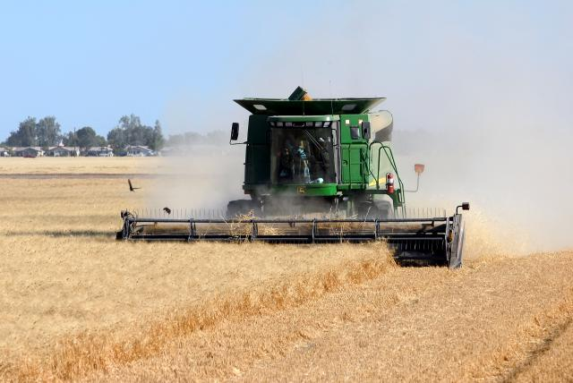 Ag-Wheat Harvest 3.jpg